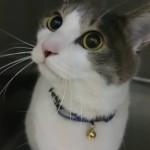 杉並区宮前にある動物病院 犬猫の診療 駐車場あり クレジットカード利用