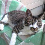 杉並区宮前にある動物病院 犬猫の診療 駐車場あり クレジットカード利用可